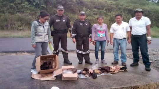 Las especies identificadas durante este operativo se encuentran en diferentes categorías de amenaza listadas en el Libro Rojo de Mamíferos del Ecuador. Foto: La Hora