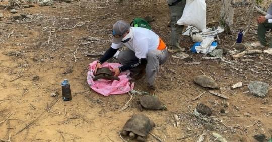 Cerca de 40 tortugas de San Cristóbal regresan a su hábitat en Galápagos / Foto: EFE