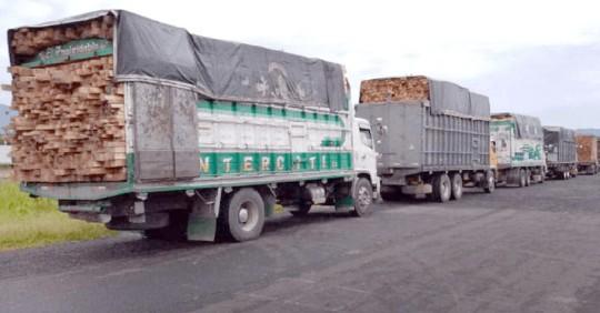 11 vehículos retenidos en Tiwintza por presunto transporte ilegal de madera / Foto: Cortesía del Ministerio de Ambiente
