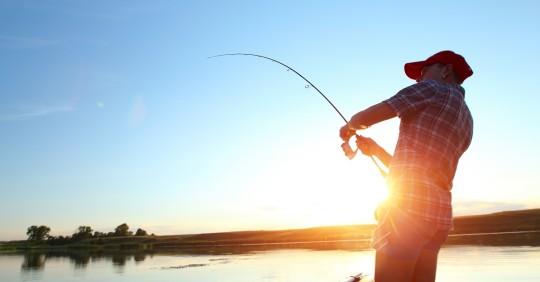 WWF lanza proyecto de pesca sostenible, digital y responsable / Foto: Shutterstock