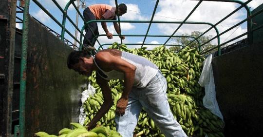 El sector bananero busca una relación más solida con Asia  / Foto: EFE