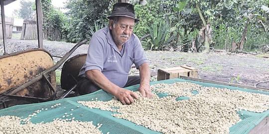 Segundo Orozco es agricultor de la parroquia Sevilla de Oro en la parroquia Morona Santiago y se dedica al cultivo de café. Foto: El Tiempo