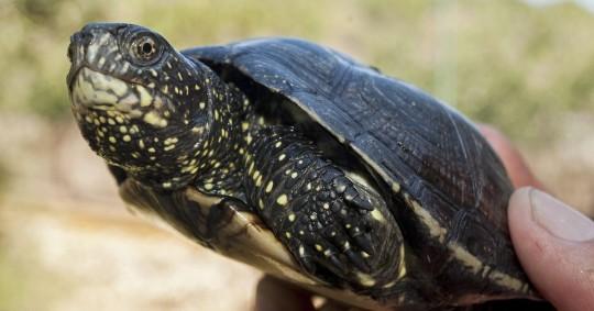 Comienza audiencia del caso sobre tortugas halladas en maleta en Galápagos / Foto: EFE