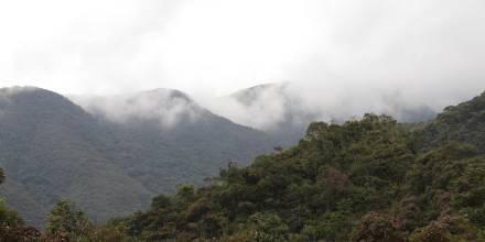 Los bosques andinos son clave para la mitigación del cambio climático / Foto: El Oriente