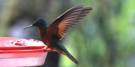 Tapichalaca, un corredor natural de aves migratorias / Foto: El Oriente