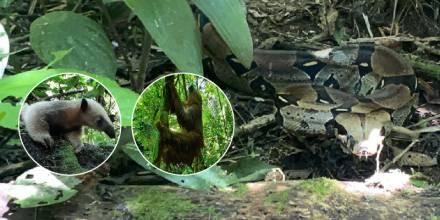 16 especímenes de fauna silvestre fueron liberados en Limoncocha / Foto: cortesía Ministerio de Ambiente