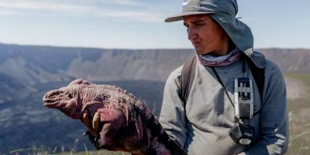 Expertos preparan proyecto de conservación de la iguana rosada en Galápagos / Foto: EFE