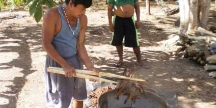 Planta de ayahuasca, la conocida liana amazónica que se usa para preparar la bebida alucinógena.  Foto: El País