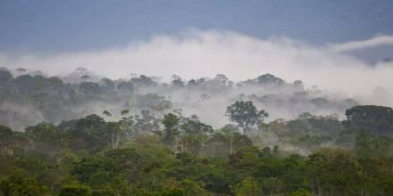 Piden a Ecuador y Perú liderar Plan biorregional para salvar la Amazonía/ Foto: EFE