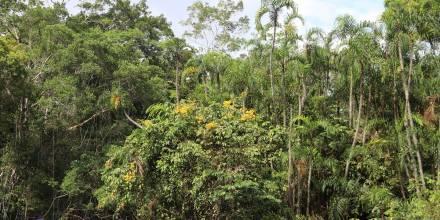 Fondo Verde para el Clima aprueba financiación para dos proyectos en Ecuador / Foto: El Oriente