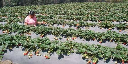 España busca 250 agricultores ecuatorianos / Foto: cortesía de la cancillería