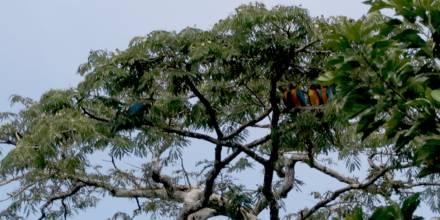 Reino Unido anuncia protección para hábitats de biodiversidad en el mundo, incluido Ecuador / Foto: El Oriente