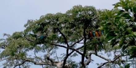 Cuáles son 5 destinos que no puede dejar de visitar en Sucumbíos / Foto: El Oriente