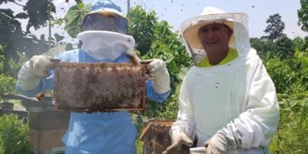 La apicultura crece en Napo / Foto: cortesía Ministerio de Agricultura