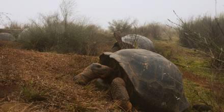 La expedición científica está formada por guardaparques y científicos de la Dirección del Parque Nacional Galápagos y del proyecto Galapagos Conservancy. Foto: EFE