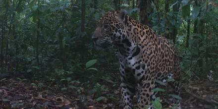 Foto: WWF - Ecuador