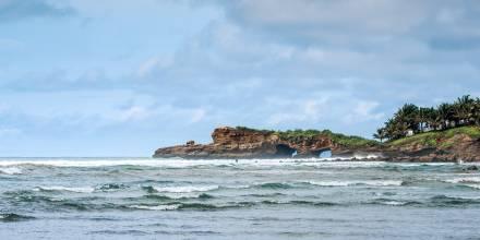 Estudio internacional verifica especies exóticas de plantas en la costa / Foto: EFE