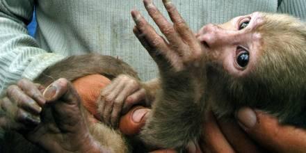 La liberación se realizó en conmemoración del aniversario de la Reserva de Producción de Fauna Cuyabeno - Foto: EFE