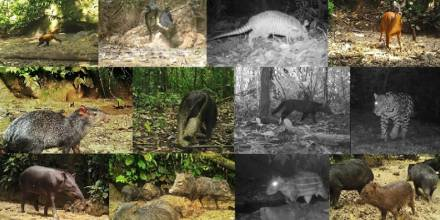 Investigación revela existencia de gran cantidad de mamíferos en los saladeros del Yasuní / Foto: cortesía Ministerio de Ambiente