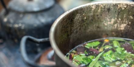 Ayahuasca, la bebida indígena que alimenta las neuronas / Foto: Shutterstock