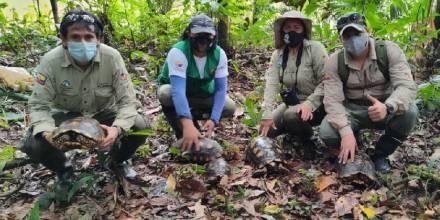 25 especímenes de vida silvestre fueron reinsertados en el Yasuní / Foto: MAATE