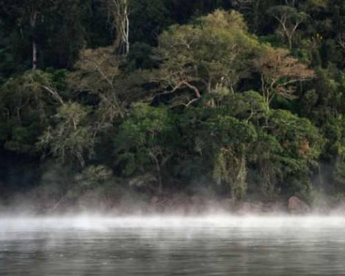 ALERTA. Según el informe, existe una conexión directa entre la expansión de las vías y la eliminación de la vegetación nativa. Foto: La Hora