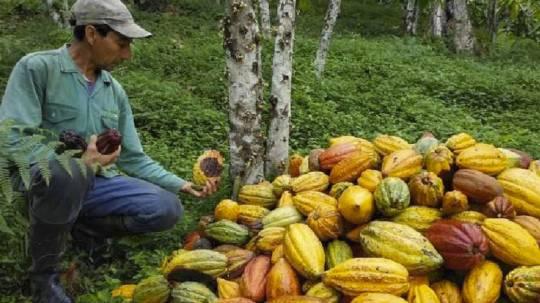 Ecuador se posiciona como un referente en recursos naturales / Foto: MAAE