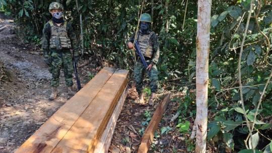 La tala ilegal de madera avanza en la Amazonía / Foto: Fuerzas Armadas