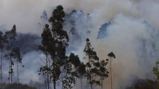 Logran extinguir un incendio forestal en la Reserva Ecológica Antisana / Foto: EFE