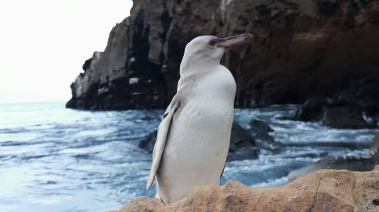 El descubrimiento lo hizo el pasado día 19 un guía naturalista local en el sitio de visita Punta Vicente Roca, en el borde costero al norte de la isla Isabela. Foto: EFE